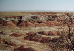 Petrified Forest in North East Arizona
